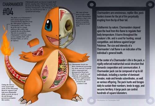 ポケモン、ヒトカゲの解剖図