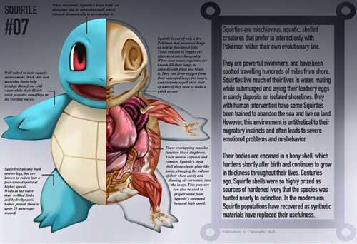ポケモン、ゼニガメの解剖図